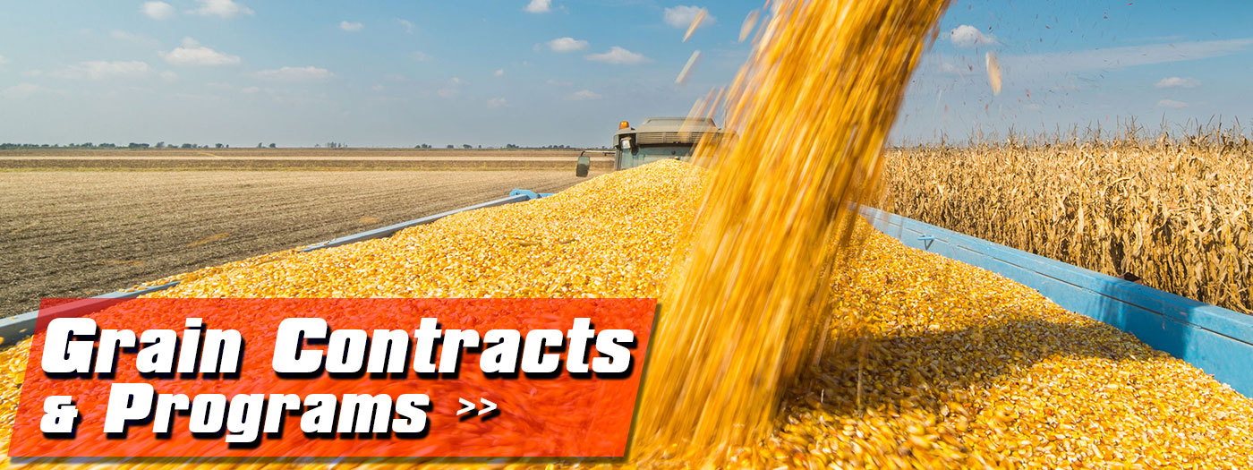 Grain-Contracts-Programs